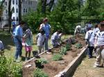 teaching garden with active participation at the Winthrop school