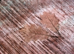 trotter leaves